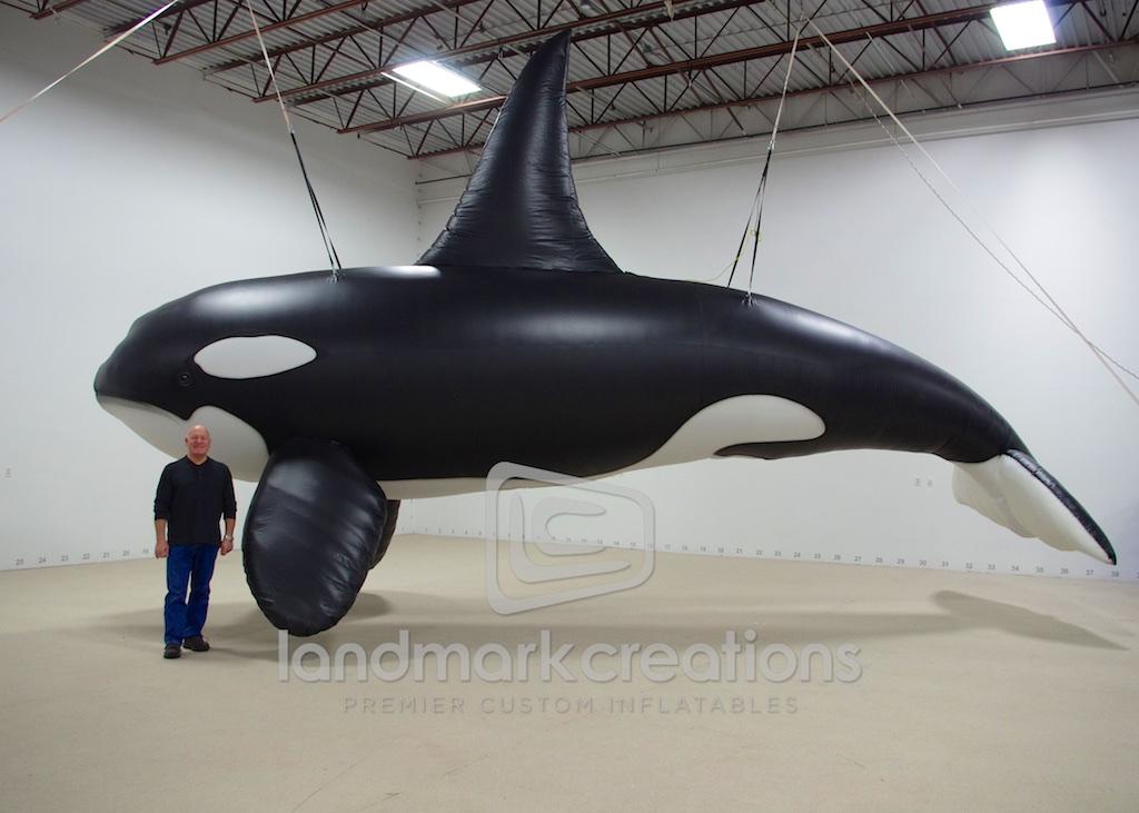 animals wildlife orca picture - photo #47