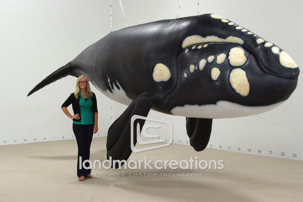 Whale for North Carolina Aquarium