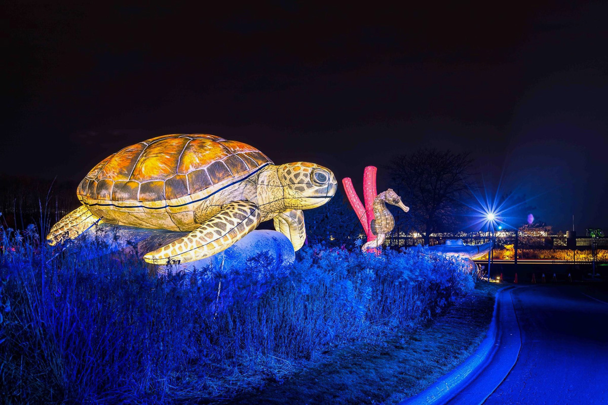 Inflatable Sea Turtle and SeaHorse Illuminated on Side of Minnesota Zoo's Drive-Thru Event at Night