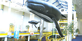 Inflatable Whales Displayed in Museum Entry