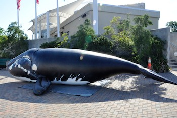North Carolina Aquarium's Inflatable Whale at World Oceans Day Event